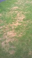 gele plekken gras