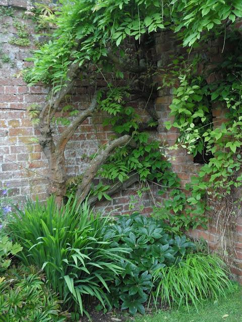 mur z cegły w ogrodzie, pnącza