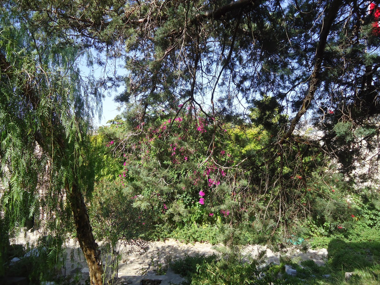 Travel Bodrum Turkey Castle Trees