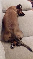 pihenés, kutya
