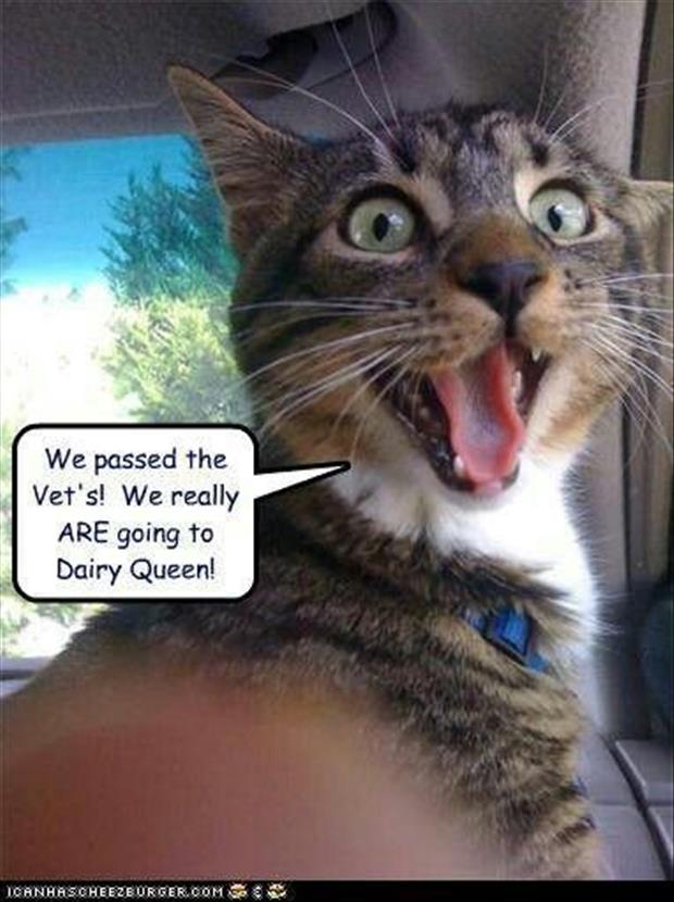 25+ Today's Funny Animal Memes and Photos