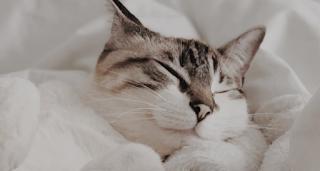 cara kucing berteman