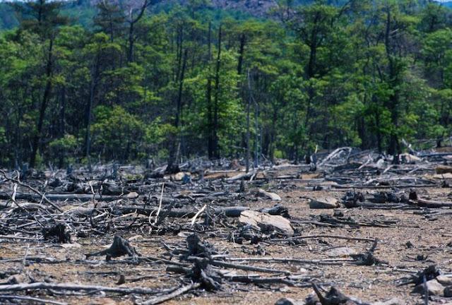 Pengertian Pencemaran Tanah, Dampak, dan Cara Menanggulanginya