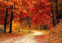 Il 23 settembre inizia l'autunno. Siete preparati?