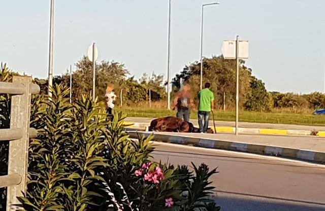 Κατέρρευσε άλογο στο Ναύπλιο