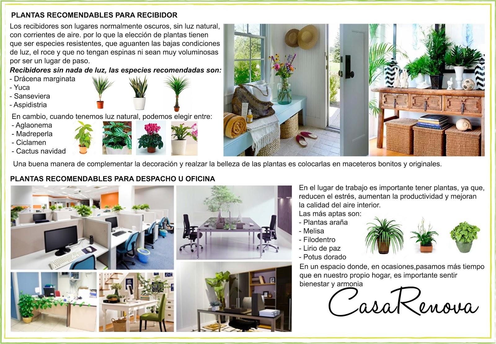 Plantas en el hogar recibidor y lugar de trabajo - Plantas de interior sin luz ...