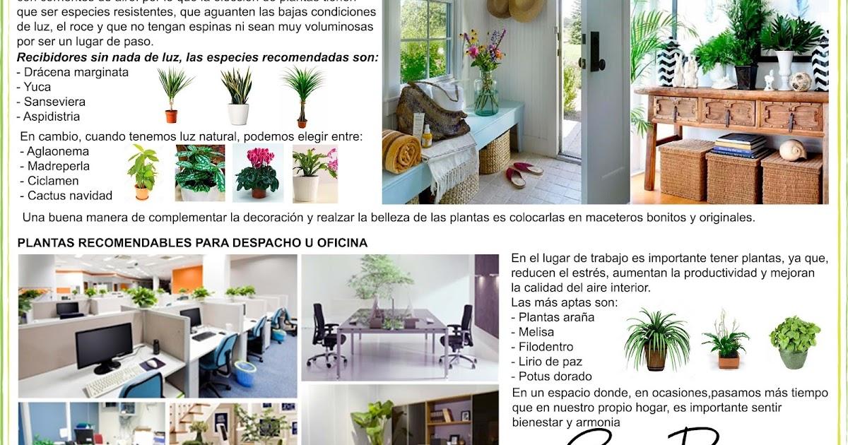 Plantas en el hogar recibidor y lugar de trabajo for Plantas en el hogar