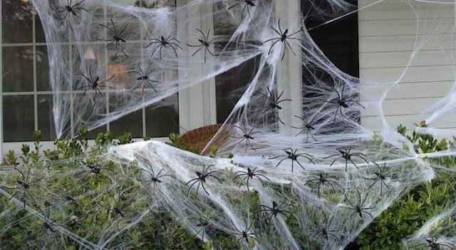 تجارب علمية مدهلة عن خيوط العنكبوت