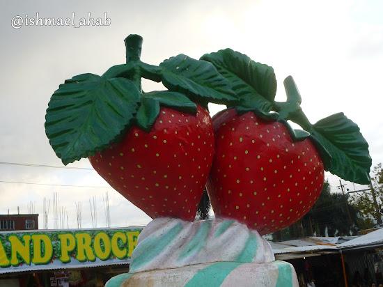 Twin strawberries of Strawberry Farm in La Trinidad, Benguet