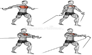 best chest exercises for gym  workout aesthetics