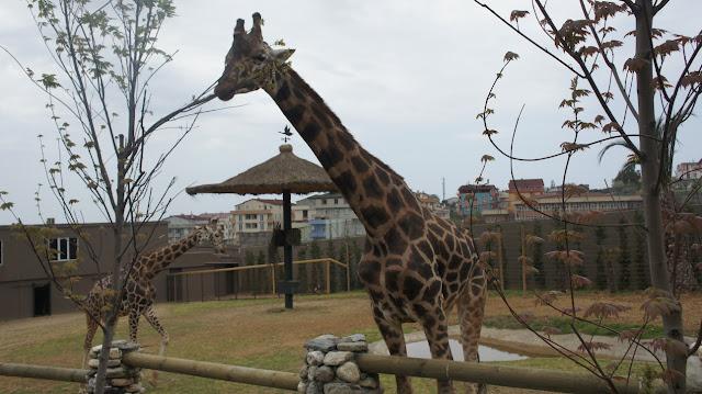 للنشاطات العائلية أفضل خمسة حدائق للحيوانات في تركيا تركيا