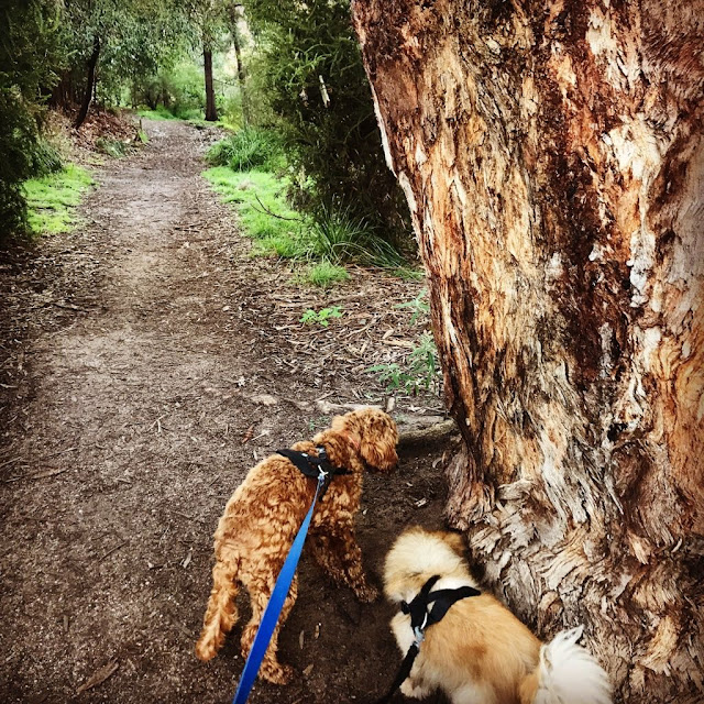 Back Creek Reserve, Camberwell, dog trail