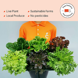 Fresh pesticide-free vegetables from Cultiveat