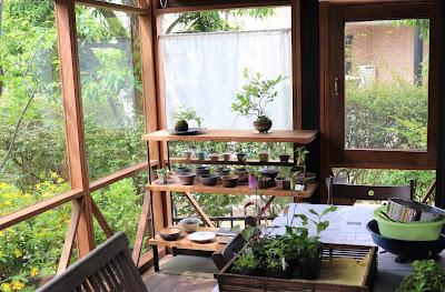 山野草盆栽教室のアトリエの様子