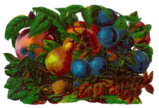 fruit artwork botanical clipart image digital illustration