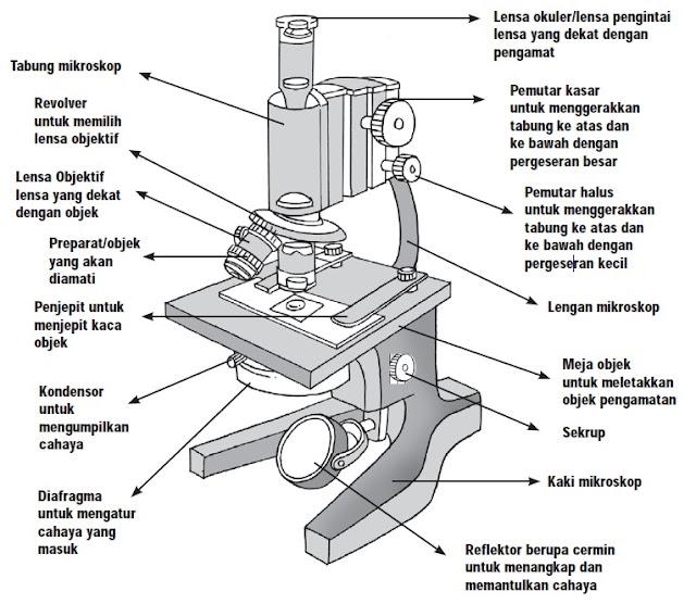 Cara Menggunakan Mikroskop yang Benar