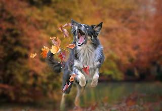 Köpek resimleri, kopek resim ve fotograflari, köpek resimleri, Komik Köpek Resimleri, İlginç Köpek Resimleri indir, Şirin Köpek Resimleri, Güzel Köpek Resimleri, Evcil Hayvan Resimleri, dog pictures indir köpekler güzel resimleri