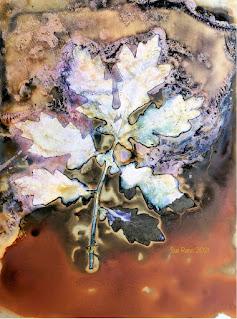 Sue Reno_wet cyanotype_image 901