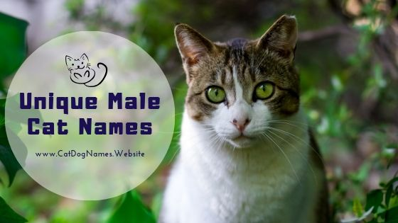 CatDogNames Website: Cat Dog Names List 2019: Find the