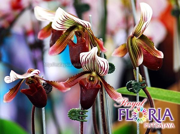 Putrajaya Royal Floria Expo 2018