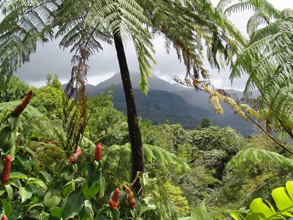 Caribbean rain forest