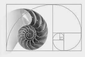 نسبة الإله : «Fibonacci number»