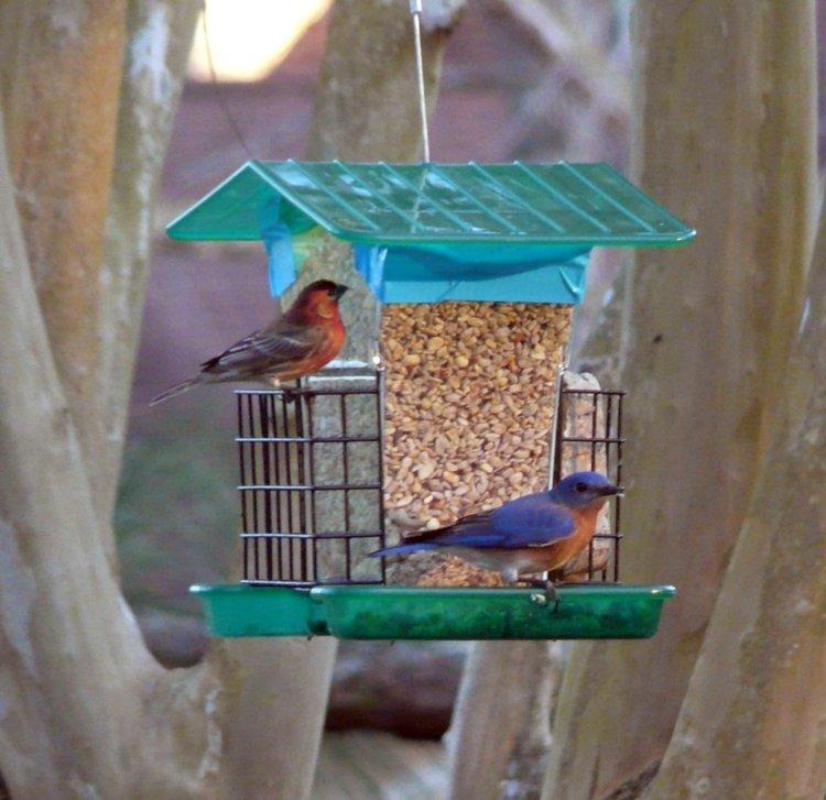 St. Johns Audubon Society: Great Backyard Bird Count