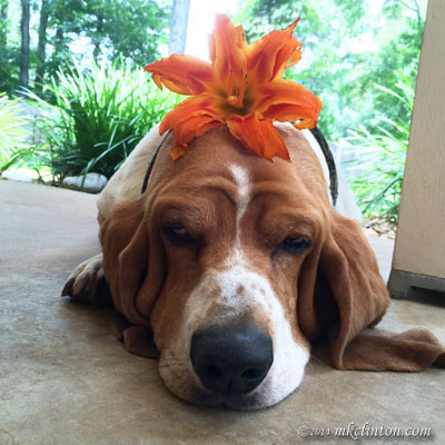 Bentley has a flower for National Do Something Nice Day