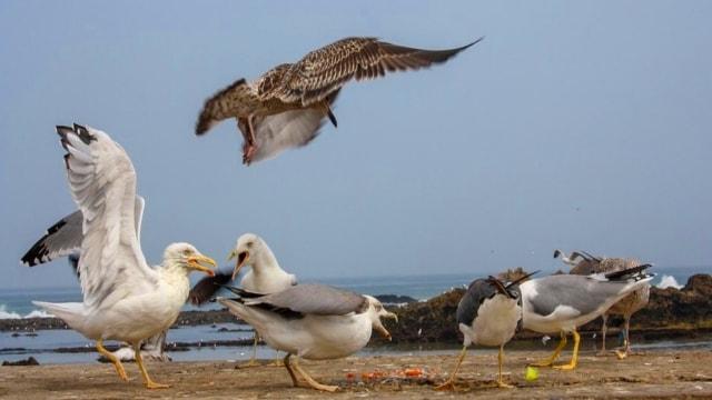 Burung Laut dan Ikan Kecil