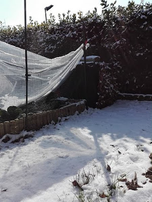 orto-di-febbraio-verze-neve