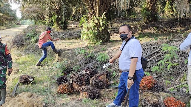 Curi Buah Sawit PT. Tebo Indah, IRT Asal Desa Sungai Keruh Ini Diciduk Polisi