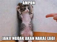 Alasan kucing lucu manja comel
