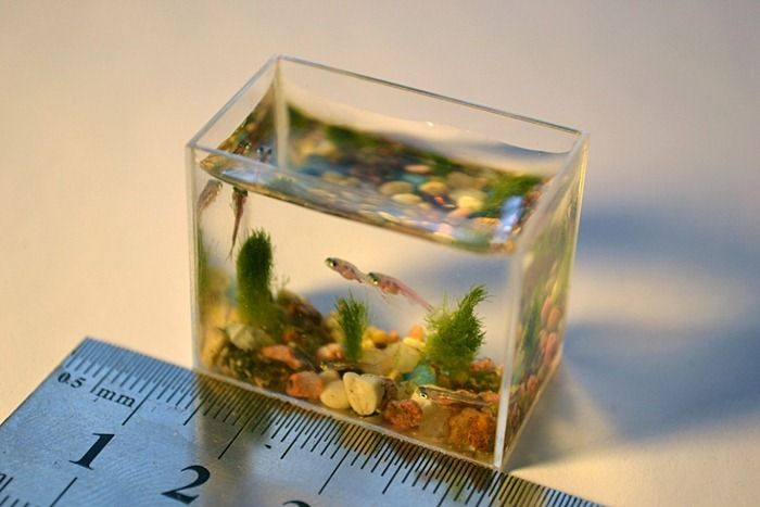 The smallest aquarium in the world: 05 Pics+Video