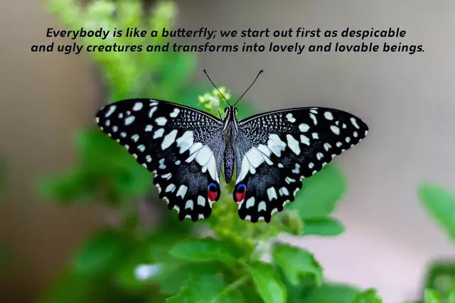 love is like butterfly quotes