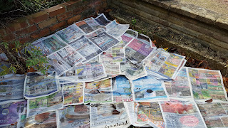 Newspaper covering the garden to mulch down the weeds