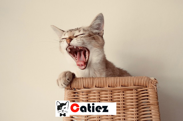 Male Cat - All You Want To Know About Male Cats