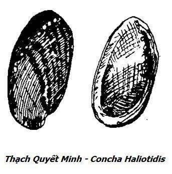 Hình vẽ Thạch Quyết Minh - Concha Haliotidis - Nguyên liệu làm thuốc Chữa Đau Dạ Dày