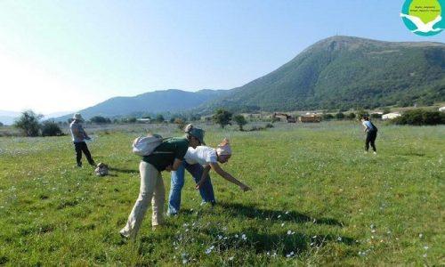 Για δεύτερη συνεχόμενη χρονιά και στις αρχές Αυγούστου πραγματοποιήθηκε συνάντηση συνεργασίας μεταξύ των Φορέων Διαχείρισης Προστατευόμενων Περιοχών Καλαμά-Αχέροντα-Κέρκυρας και Λίμνης Παμβώτιδας Ιωαννίνων, για την επιβεβαίωση της παρουσίας της ακρίδας της Ηπείρου στην προστατευόμενη περιοχή Λιμνοπούλα Παραμυθιάς Θεσπρωτίας. Το «Ακριδάκι της Ηπείρου»