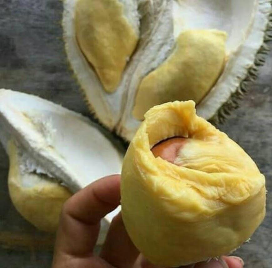 Bibit Durian Montong Kaki 3 1meter Jawa Timur