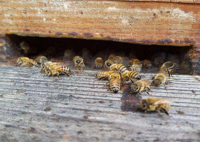 organisation d'une ruche