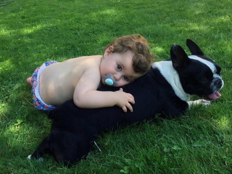 Bulldog y bebé