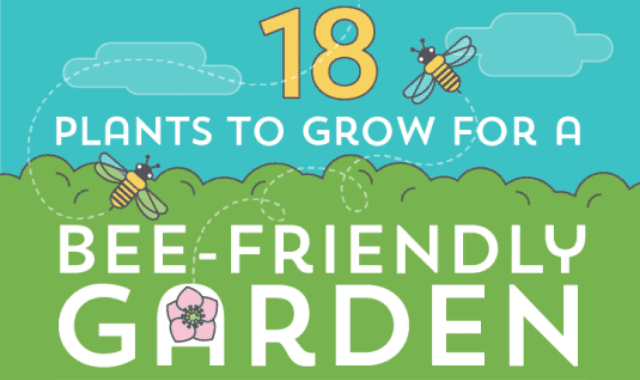 18 Plants To Grow For a Bee-Friendly Garden