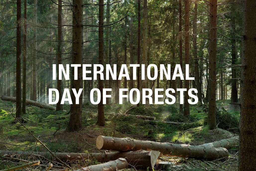 International Day of Forests Wishes Unique Image