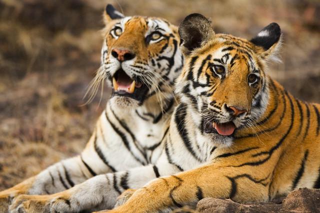 Wildlife Of Bangladesh  My Hd Animals