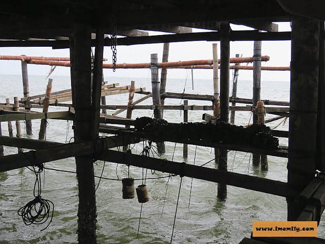 kupang farm Desa Keroma Eko Resort