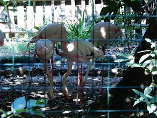Parco Gallorose(ガッロロゼ公園)フラミンゴ