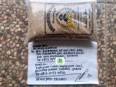Benih padi yang dibeli M. MUKROMIN Pekalongan, Jateng. (Sebelum packing karung ).