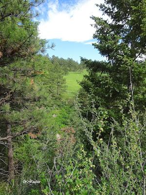 trail through forest