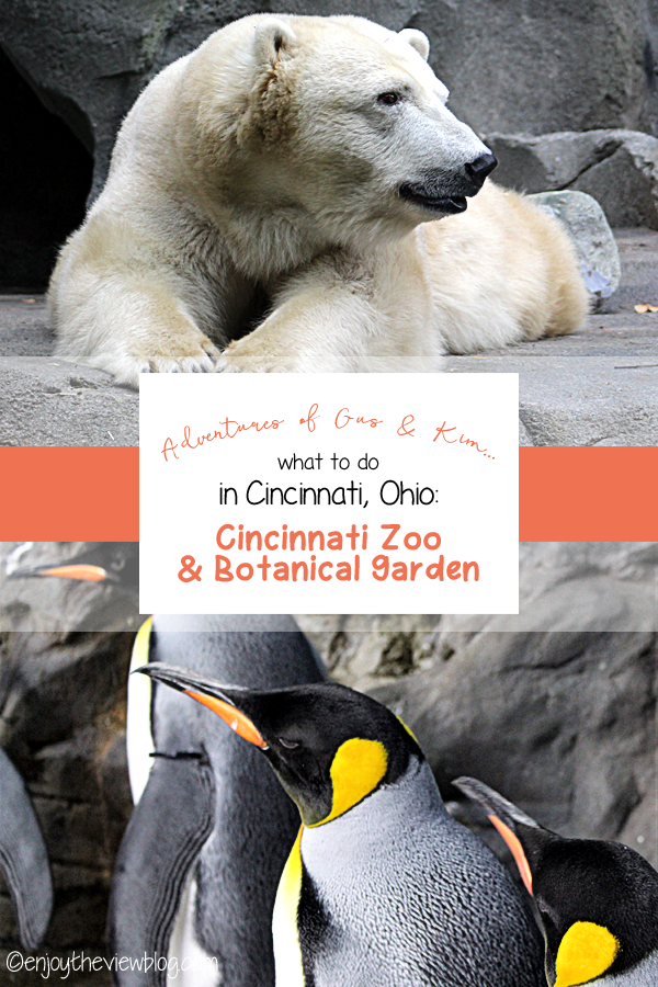 Infographic with photos of a polar bear and penguins at the Cincinnati Zoo