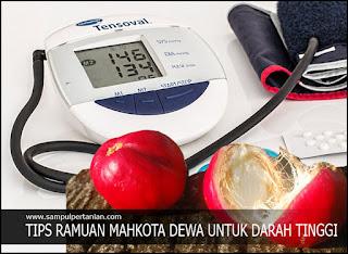 Tips resep ramuan MAHKOTA DEWA (Phaleria macrocarpa) untuk darah tinggi